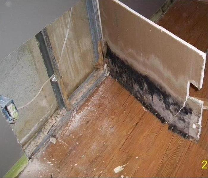 Mold Remediation Done By Professionals?--Destin After