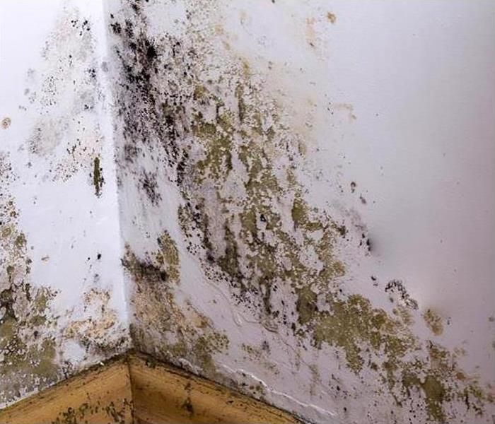 Mold Remediation In Mary Ester