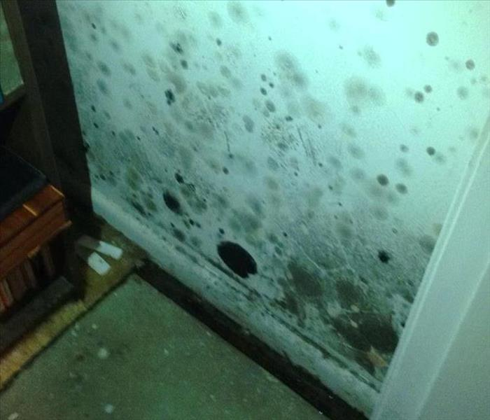 Mold Remediation Does your Destin Home have a Mold Problem