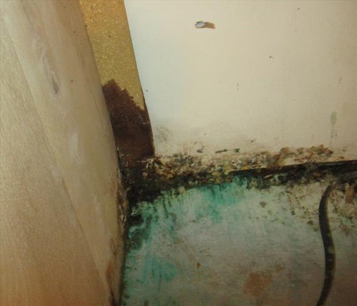 Mold Remediation Mold Vs. Mildew