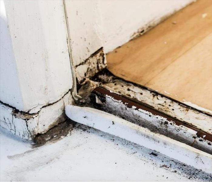 Mold Remediation Options for Destin Residents after a Mold Damage Experience